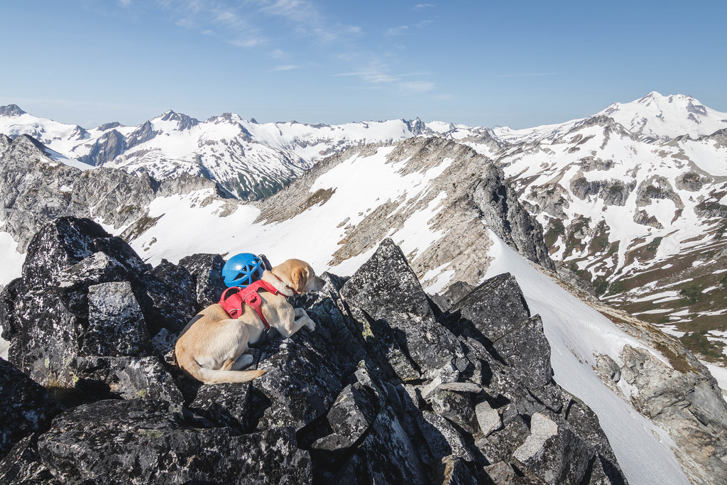 Summit dogs on Mount Berge