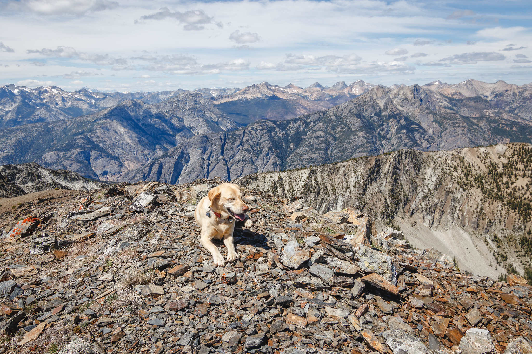 Summit dogs on Sunrise Peak 8144