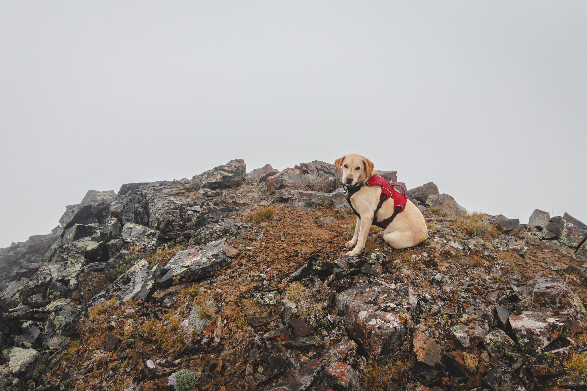 Summit dogs on North Star Mountain
