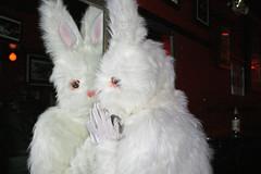 pet(0.0), west highland white terrier(0.0), toy(0.0), animal(1.0), textile(1.0), rabbit(1.0), angora rabbit(1.0), rabits and hares(1.0),