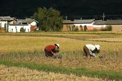 Yunnan 2008 - Shaxi