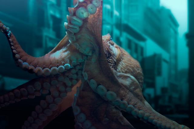 Underwater City OctopusUnderwater Octopus