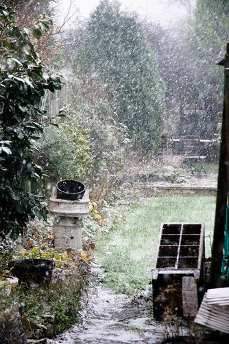 Blizzard conditions in the garden