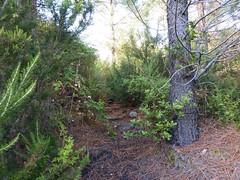 Sente RG du ruisseau de Sainte-Lucie : la trace