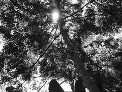 Sunshade 01
