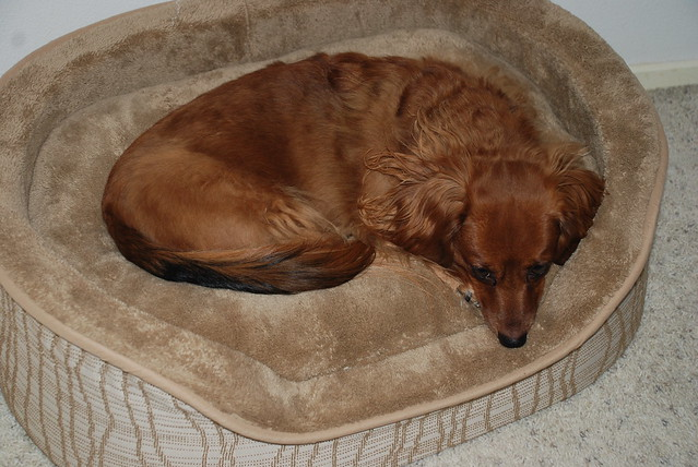 Dog Beds Small Breeds