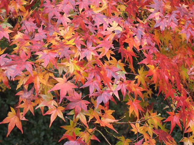 Autumn in Kiyomizu Temple, 2008