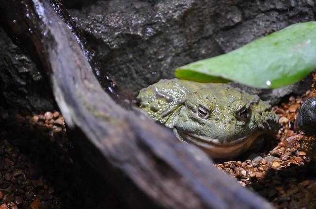 Jeremy Bullfrog