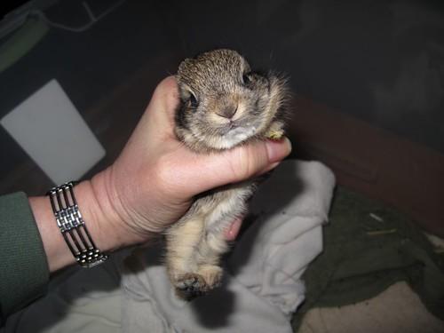 Baby bunny, Mary Cummins, Animal Advocates