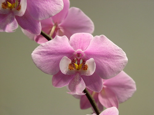 Escape to madagascar during the missouri botanical garden - Orchid show missouri botanical garden ...