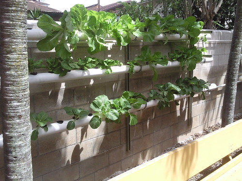Hydroponics at Home?   ShedBuilder.info