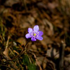 Le printemps par Marjolaine