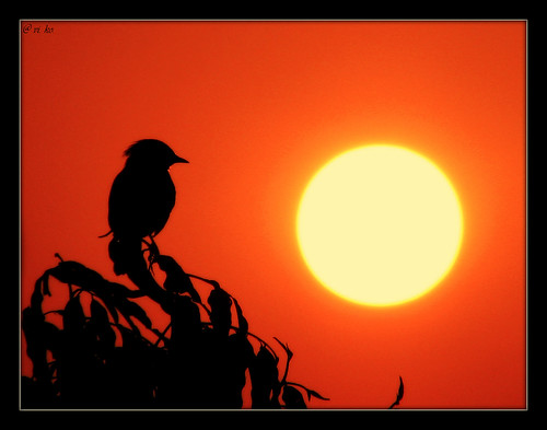 morning red orange sun india tree bird nature beautiful sunshine silhouette yellow sunrise circle shine natural maharashtra vikas pune viko koshti