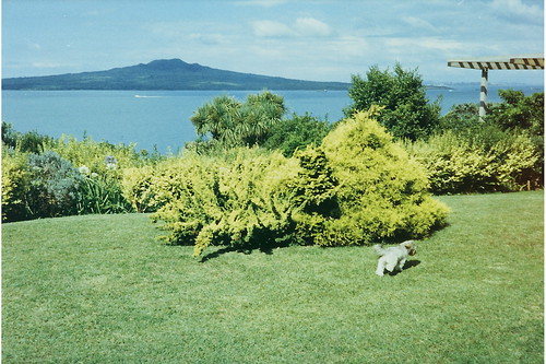 Rangitoto View 6