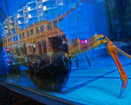 Sydney Chinatown, crayfish in the tank, building across the road