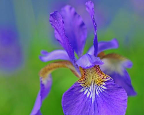 spring garden by Wils 888