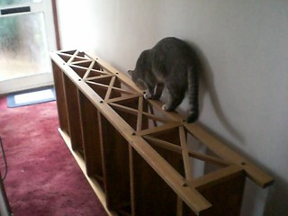 Nimbus and the new bookshelf