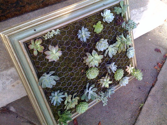 Luna see diy tutorial framed vertical succulent garden for Diy vertical garden wall