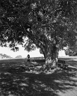 Tree at John Rankin House, Ripley OH, 2017
