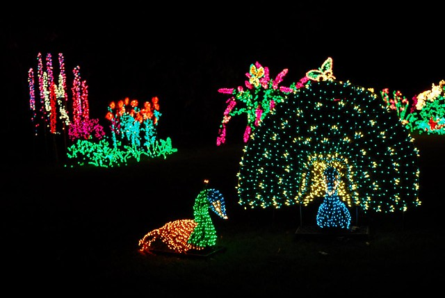 Garden D 39 Lights At The Bellevue Botanical Garden Flickr