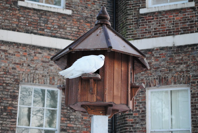 Dove bird house flickr photo sharing for Dove bird house