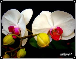 "Feliz ""QUINTA FLOWER""."