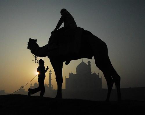 india sunrise bravo taj mahal agra camel