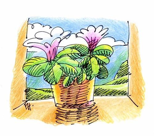 flowers pot on the sill