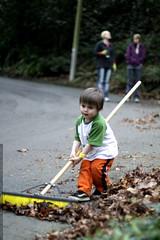 sequoia handling a very big broom