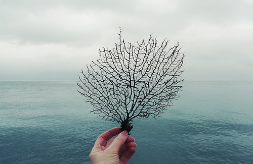 see the sea fan