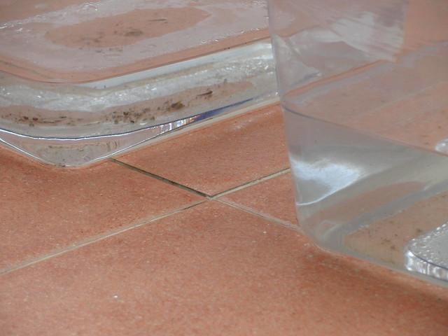 Cacharros de mi madre para recoger agua de lluvia flickr - Recoger agua lluvia ...