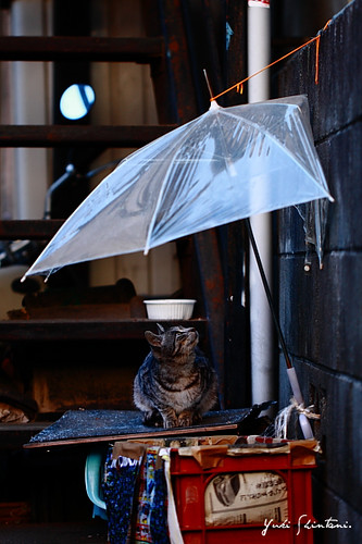 It thinks to the umbrella.