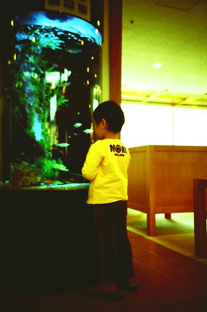 The boy who is looking at the fish with amusement
