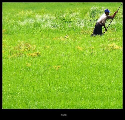 "portrait verde green grass erba cisco laos ritratto donkhong champasak siphandon presenza photographia ""photographia"" maggio2011challengewinnercontest"