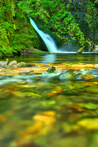 Yearning to Linger Goldstream Park Victoria BC by Ireena Eleonora Worthy
