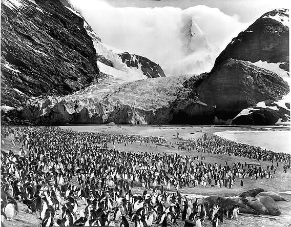 Penguins below Degeer Glacier, by Frank Hurley 1917