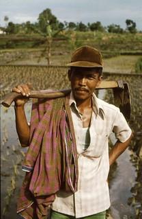 Farmer, Java