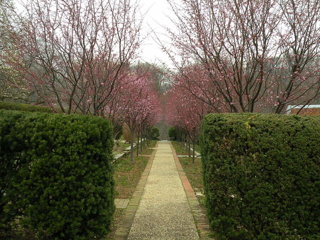 Dumbarton Oaks Path