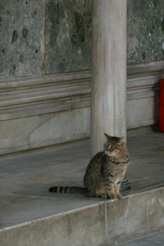 Hagia Sophia cat patrol