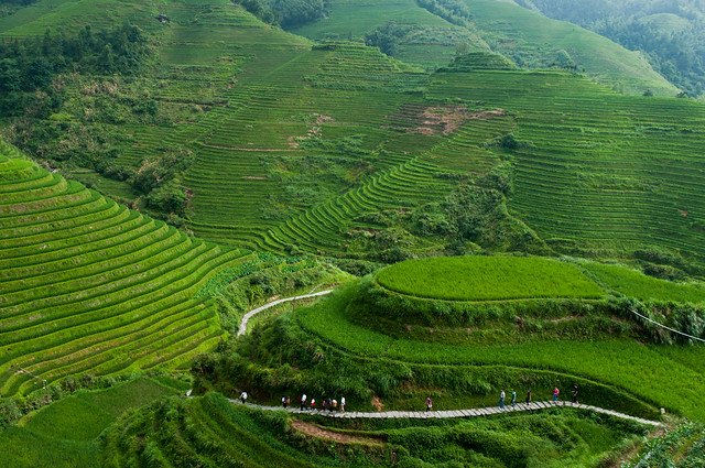 Dragon 39 s backbone rice terraces longsheng dragon 39 s for What are terraces