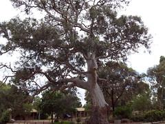 flower(0.0), adansonia(0.0), savanna(0.0), oak(1.0), tree(1.0), plant(1.0),