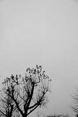 冬の曇り空