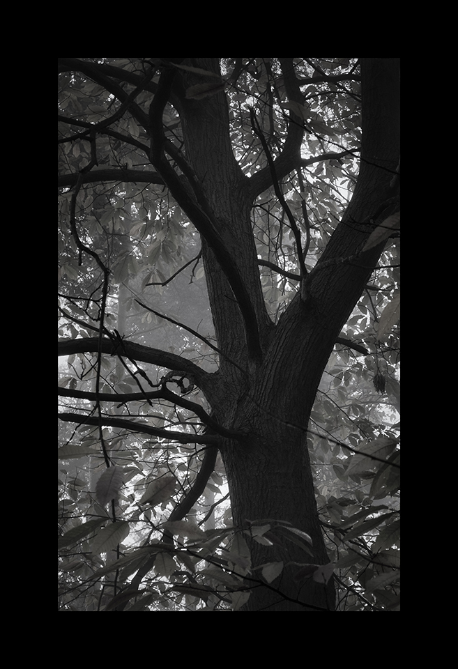 Photography: Tree by Nicholas M Vivian
