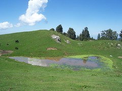 Crystal Meadows of Mukshpuri Top