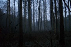 THE WOODS AT DUSK 1