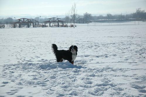 Just Enjoying the Snow