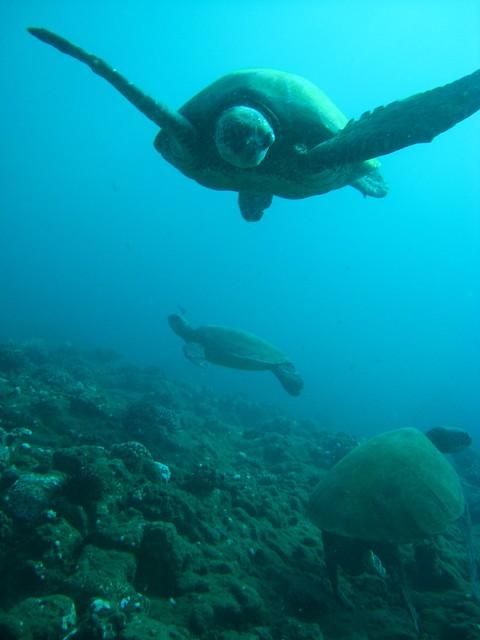 Scuba Diverfeature Flickr Photo Sharing