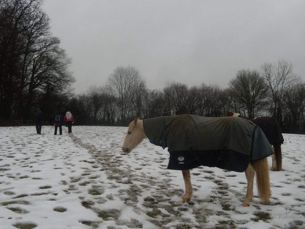 Horses in snow DSCN8597 Chorleywood to Chesham