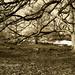 Tree. by mrs.alibeck