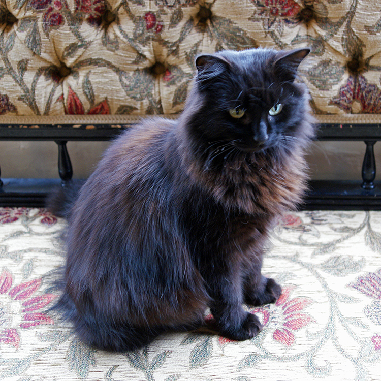 A royal cat?  (I now know, called Merlot!)